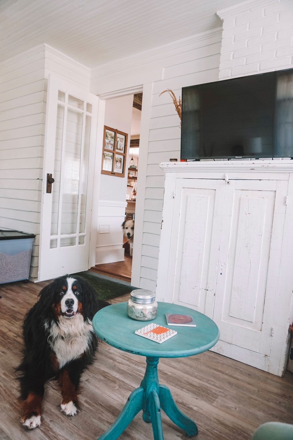 bernese mountain dog in sunroom