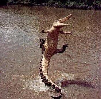 Ikbhal Funny Alligator
