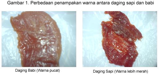 Membedakan daging sapi dengan daging babi hutan / Celeng