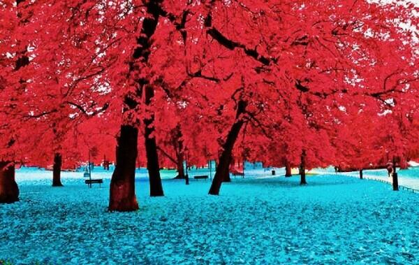 صور مناظر طبيعيه جميلة
