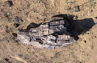 Регіональний ландшафтний парк «Клебан-Бик». Геологічне оголення. Араукарії