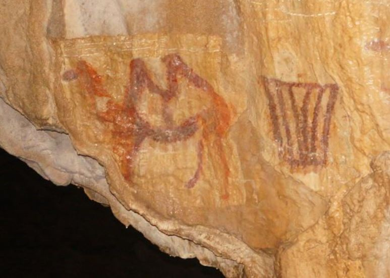 Drawing of a two-humped camel in Kapova cave (Southern Urals) estimated to be between 14,500  and 37,700 years old (Credit: Vladislav Zhitenev/Moscow State University)