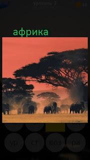 389 фото пейзаж Африки с животными 3 уровень