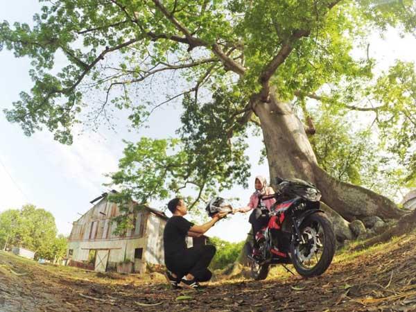 Pohon Randu Gede Indramayu