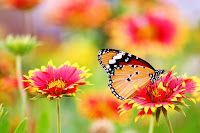 image of a butterfly on a flower