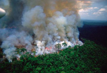 Αμαζονία : Σύμφωνο 7 χωρών για την προστασία του τροπικού δάσους