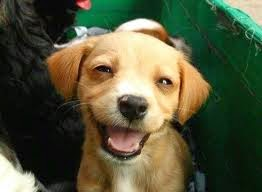 Tiernas Imágenes de Animales Sonriendo 1