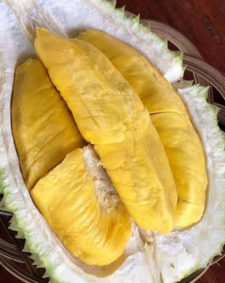 Bibit Durian Musangking Kaki 3 Sulawesi Utara