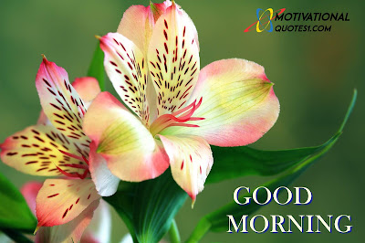 Good Morning Flowers, Morning Flowers,