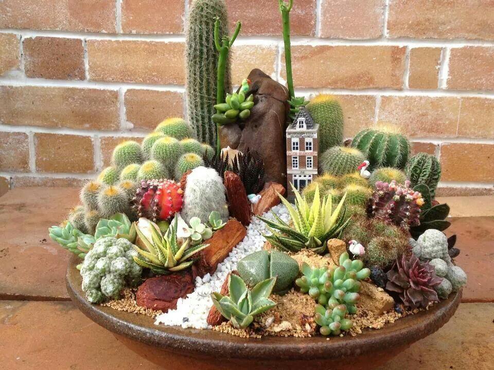 Menanam Kaktus Dari Bibit Biji Mudah Lengkap Dan Jelas