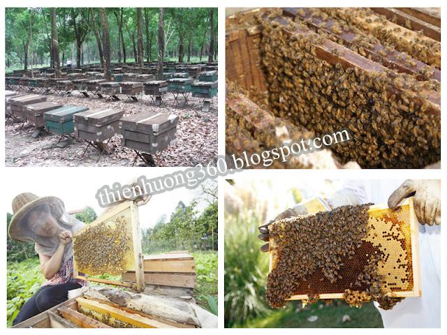 Mật ong được nuôi trong các thùng gỗ