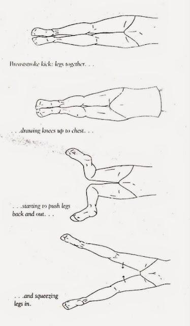 teknik gerakan kaki renang gaya dada