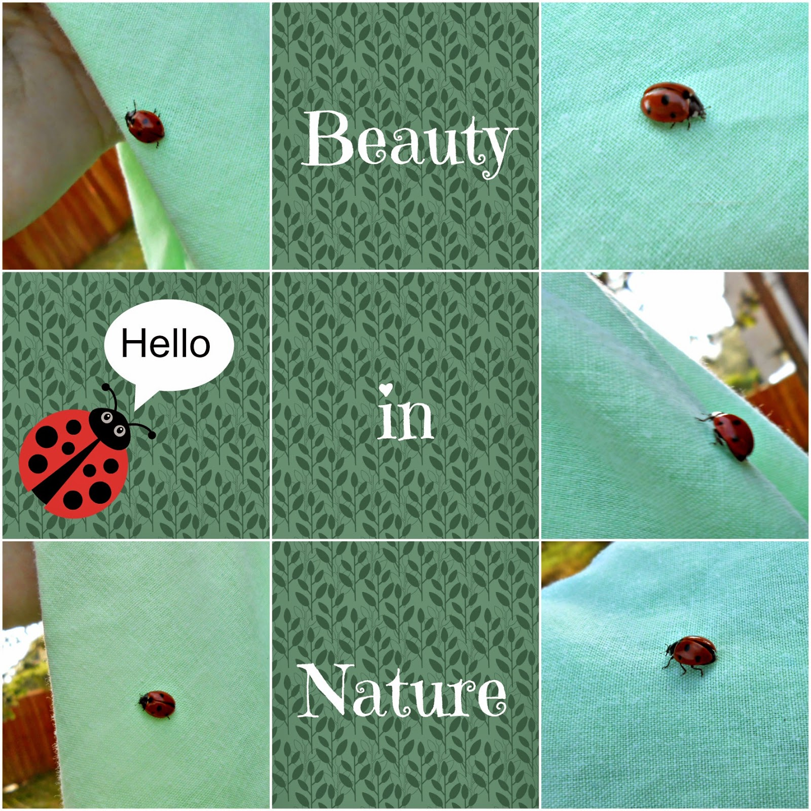 Ladybird, Beauty, Nature,