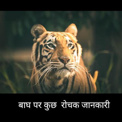 tiger in hindi