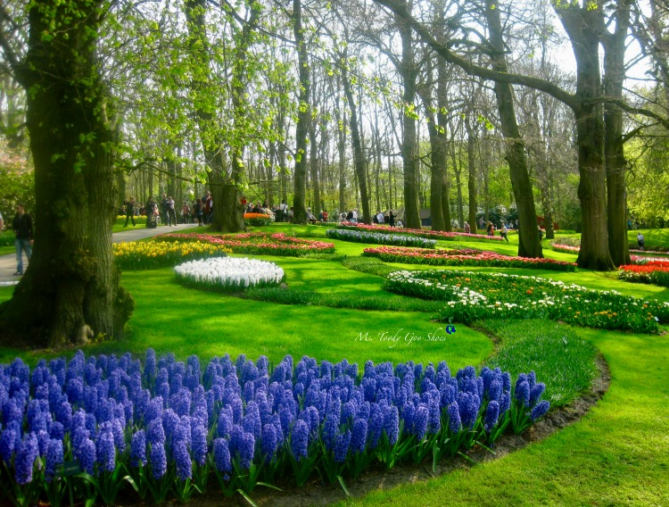 Tulip season in Keukenhof Gardens just outside of Amsterdam is one of the world's loveliest sights! | Ms. Toody Goo Shoes