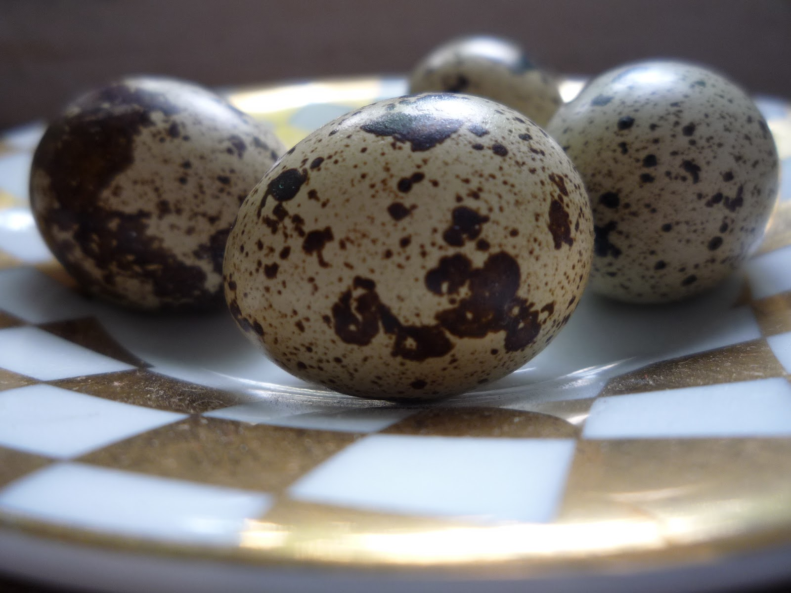 hatching and raising quail organically for hay fever and eczema