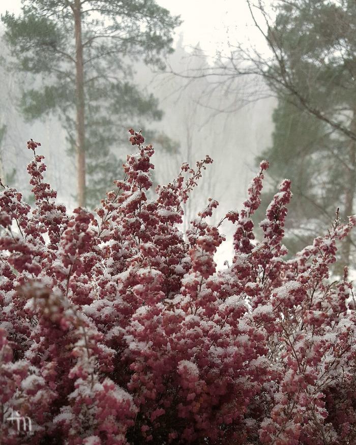 kallunat ja lumipeite