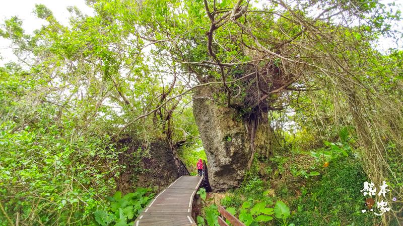 小琉球山豬溝生態步道-彷如阿凡達中身處潘朵拉星上的納美人禁地