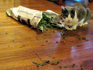 Spackle Puss (the cat) 19 (with catnip 2012)