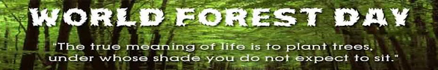 Happy Forest Day Facebook Cover Picture