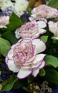 unusual-pink-and-white-carnations