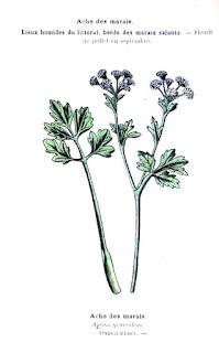traitement à base des remèdes à base de plantes