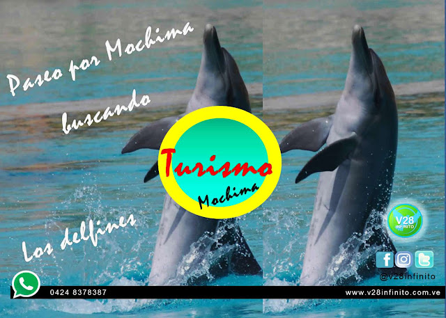 imagen paseo isla mochima delfines