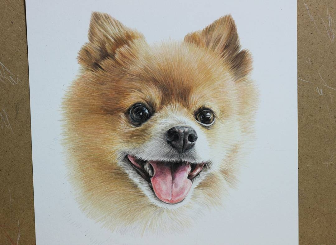 13-Pomeranian-Jae-Kyung-Cute-Kittens-and-Puppies-Drawings-www-designstack-co