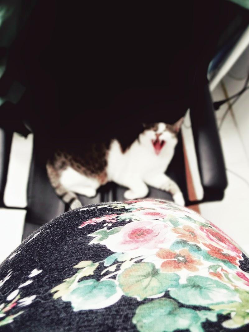 Oddam kota PILNIE - krótko o alarmie dzieciowym
