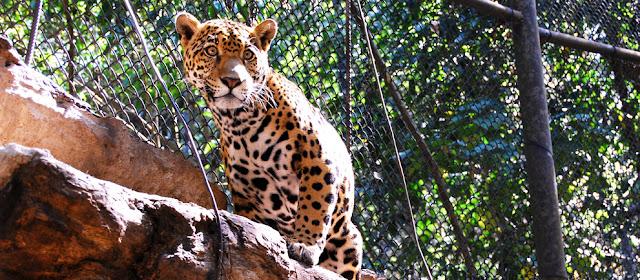 Visita Zoológico Zoomat Chiapas