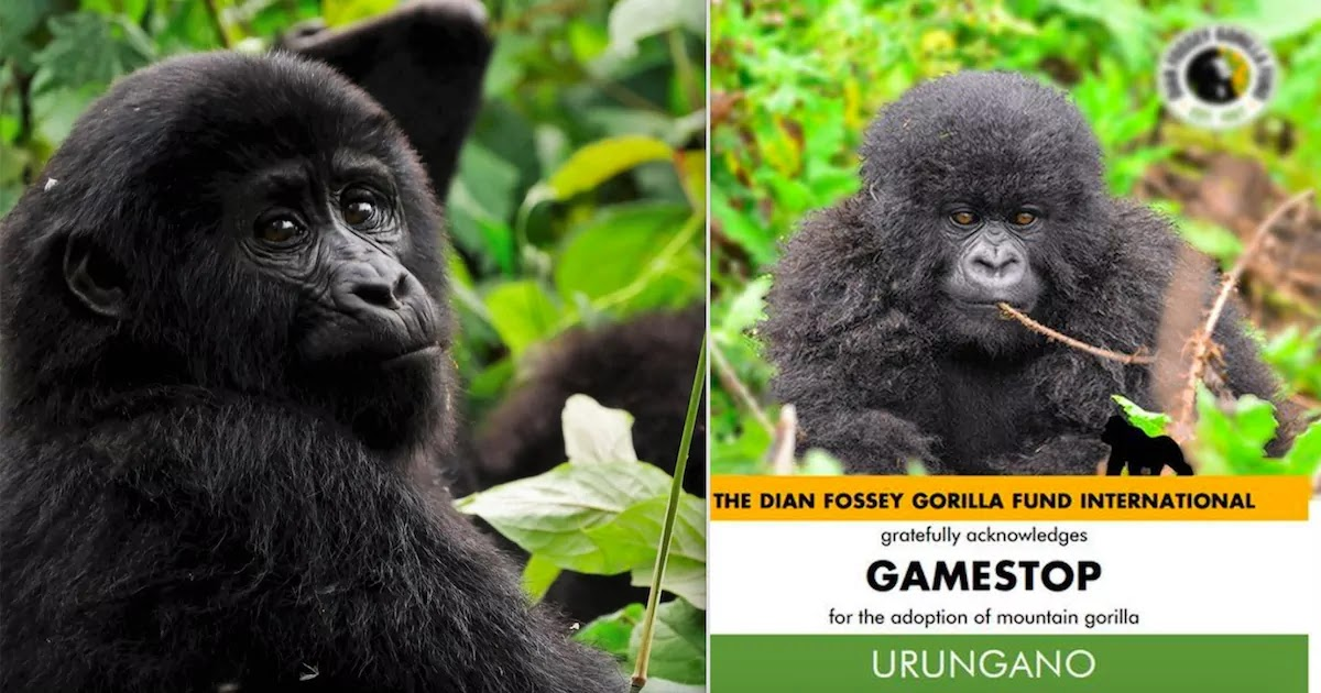 Reddit Investors Are Using Their GameStop Returns To Help Gorillas And Other Endangered Animals