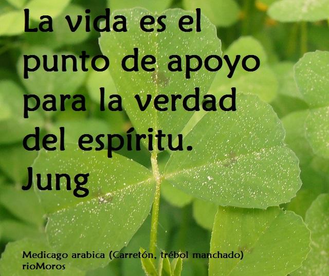 La vida es el punto de apoyo para la verdad del espíritu Jung