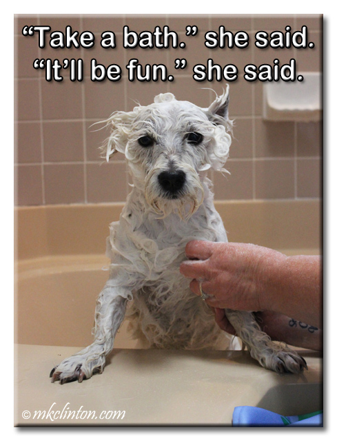 bath meme with Westie