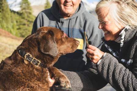 Pet Insurances For Dogs -Best Trusted Pet Insurances Companies For 2021