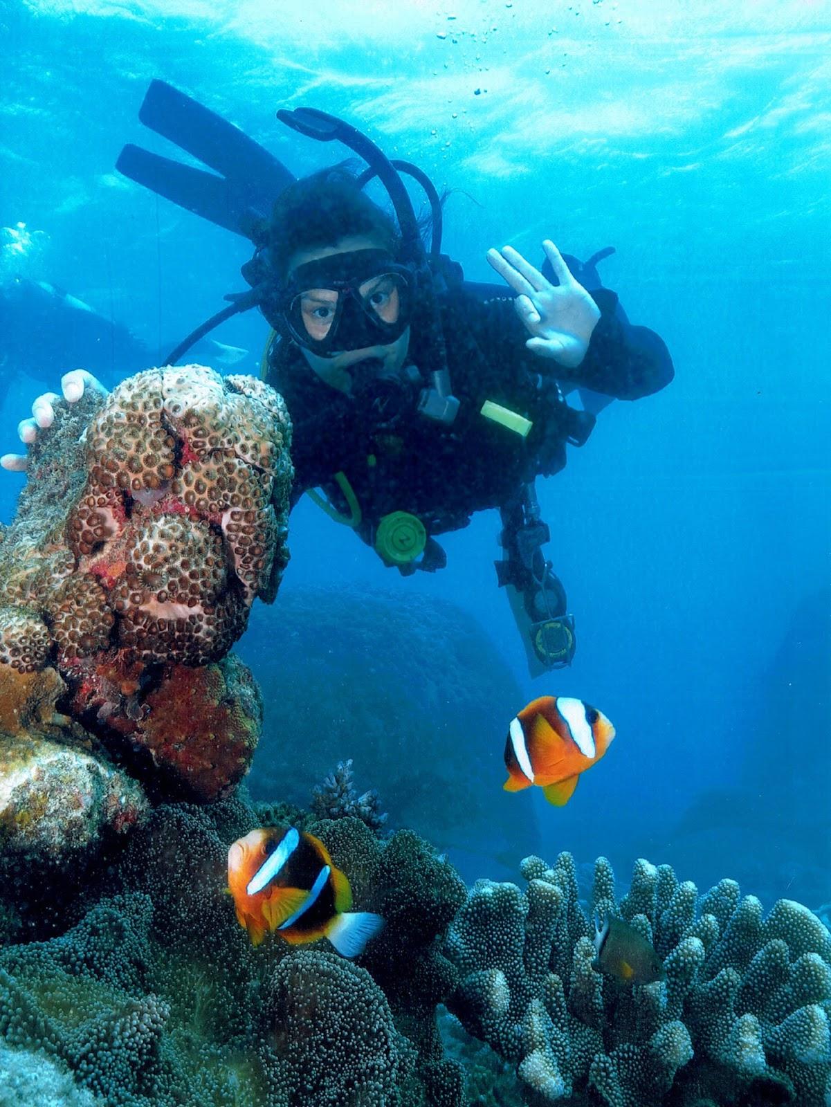 水肺潜水,大堡礁,尼莫鱼