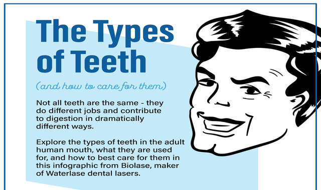 The Types of Teeth #infographic