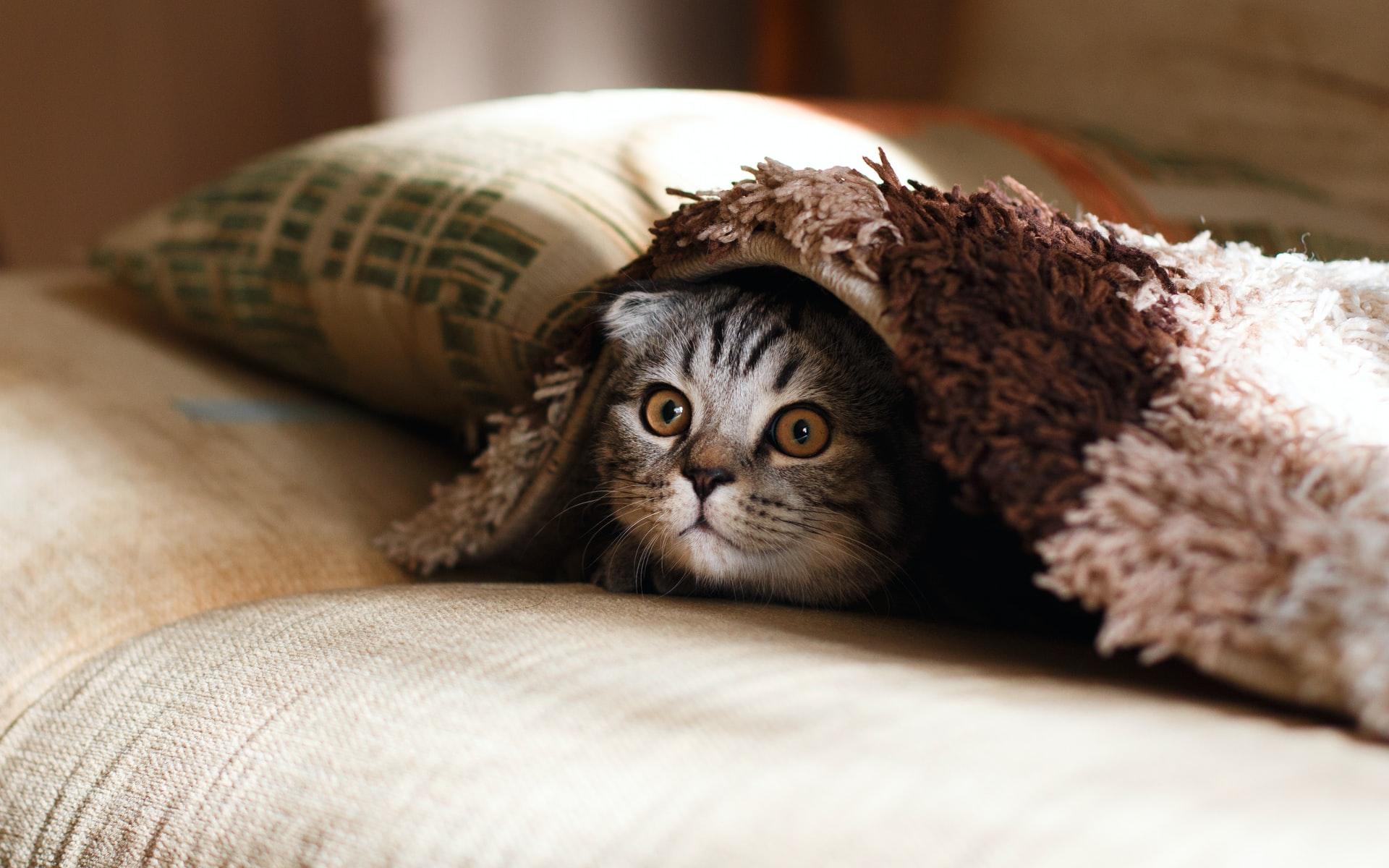 Kebaikkan Dan Manfaat Ubat Cacing Kepada Kucing Haiwan Peliharaan Anda