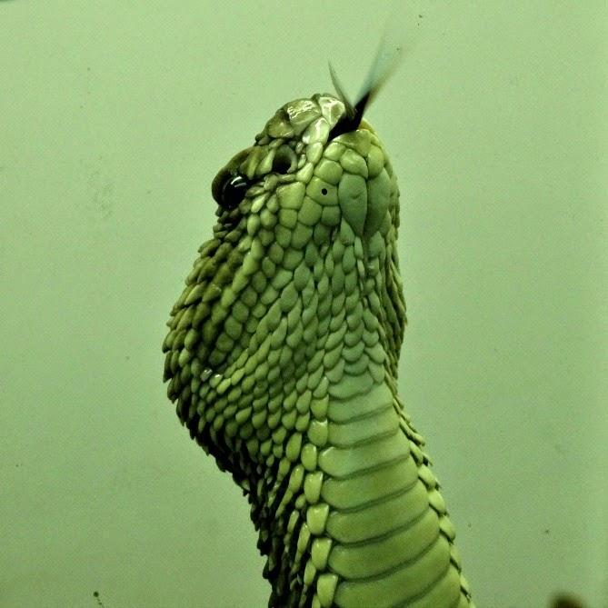 Um detalhe da língua da cobra cascavel