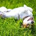 Γιατί οι σκύλοι τρίβονται στο χορτάρι;...
