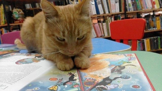 Живодер убил кота-библиотекаря в Тверской области