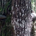 Kod Lukavca pronađen minobacački projektil