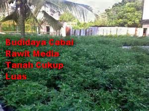 Budidaya Cabai Rawit