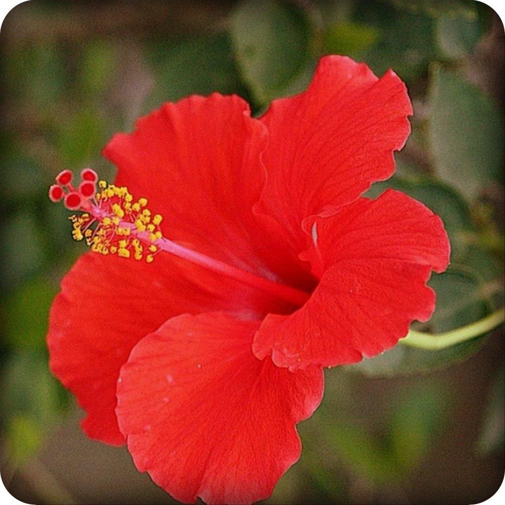 Download 640+ Gambar Bunga Dan Bagiannya Serta Fungsinya HD Terbaru