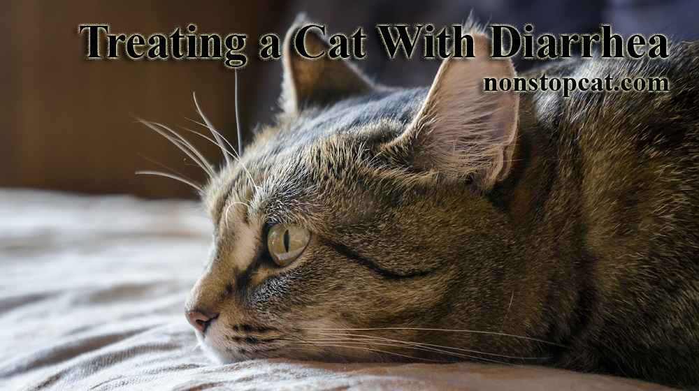 Treating a Cat With Diarrhea