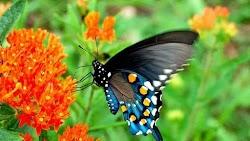 Η επαφή με τη φύση πάντα έχει τη δική της χάρη. Μάλιστα, εάν αυτή γίνεται σε μικρή ηλικία έχει μεγαλύτερη επίδραση στον άνθρωπο, σύμφωνα με ...