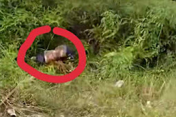 Penemuan Mayat Tanpa Kepala Dan Kaki di Lintas Bono Kec Bunut, Buat Heboh Warga Dan Pengendara