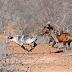 Homem bate em árvore e morre quando treinava para pega de boi em Betânia