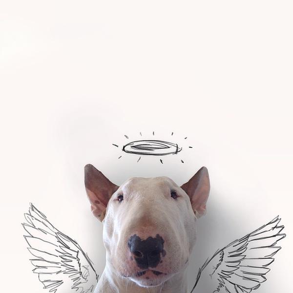 Những bức hình bày trò siêu đáng yêu của chú chó bull terrier cùng cậu chủ
