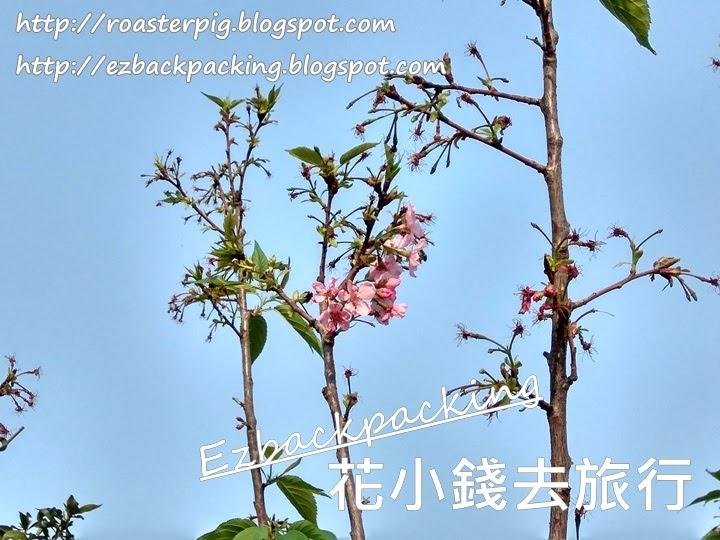 2021香港花展樓花