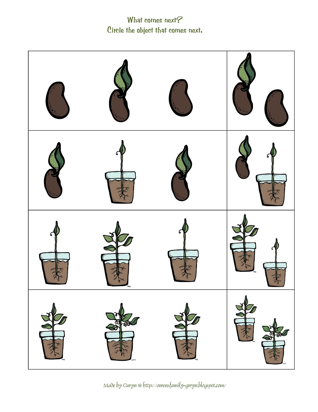 Plant Life Cycle For Preschool